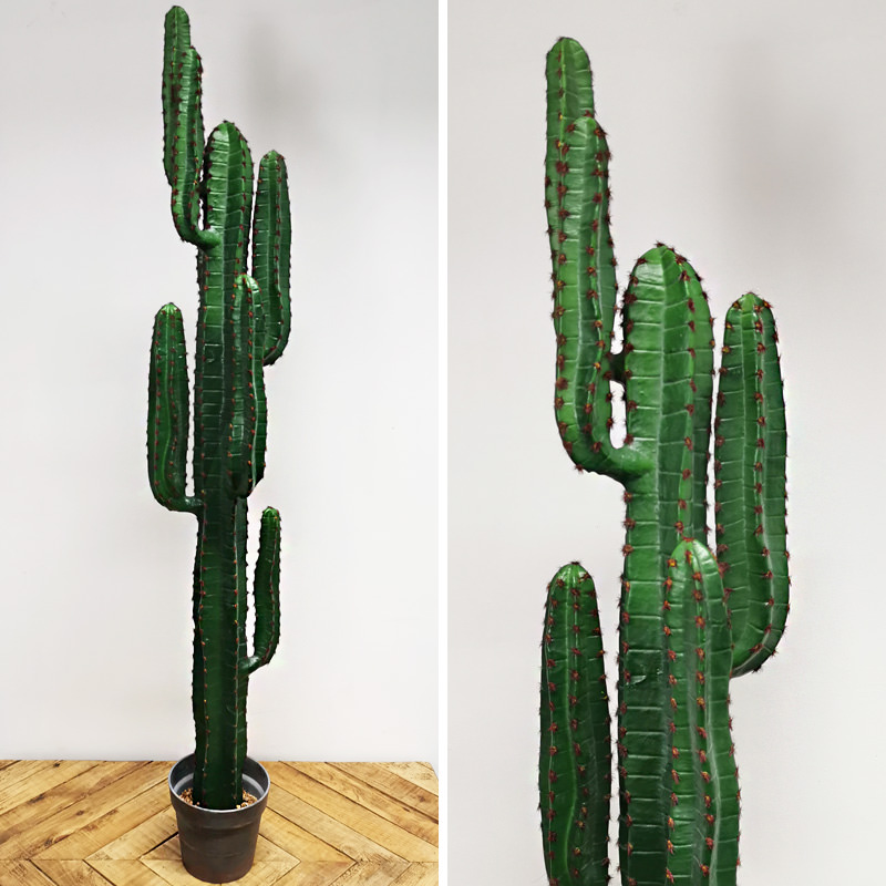 Tall Cactus Tree