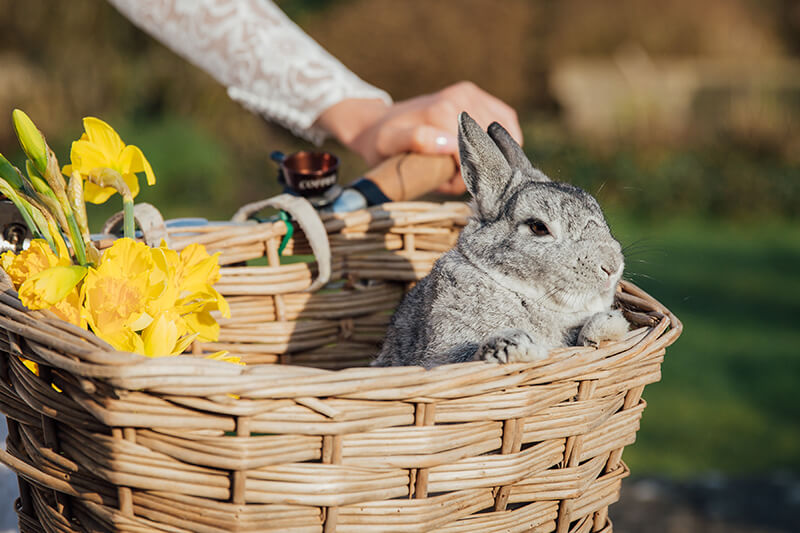 rabbit in bike basket 